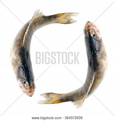 Walleye Or Zander Tail Fish Close Up Isolated On White Background