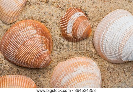 Seashells On A Golden Beach Sand Background. Summer Seaside Travel Concept.
