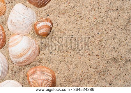 Seashells On A Golden Beach Sand. Summer Seaside Travel Concept. Copy Space On The Right.