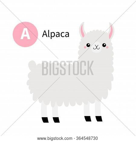 Letter A. Alpaca Llama. Zoo Animal Alphabet. Funny Lama. English Abc With Cute Cartoon Kawaii Funny