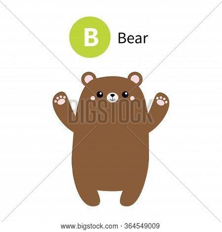 Letter B. Bear. Zoo Animal Alphabet. English Abc With Cute Cartoon Kawaii Funny Baby Animals. Educat