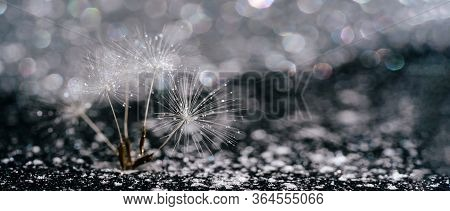 Abstract Dandelion Seed On Glittering Background. Group Of Tender Blowball Stem On Glistening Bokeh