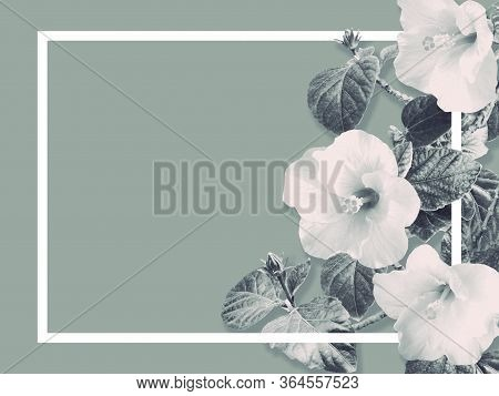 Abstract Floral Background With Copy Space For Greeting Card. Hibiscus Flowers And Green Leaves Vint