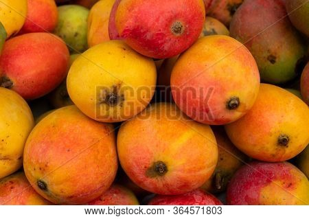 Mangos, Juicy Stone Fruits (drupe), Produced From Flowering Plant Genus Mangifera, Are On Display Fo