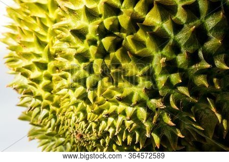 Close Up Of Durian Showing Texture Of Rind And Thorns