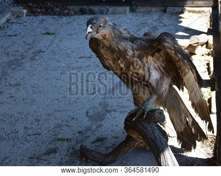 Stuffed Brown Eagle On Wooden Tree Branch