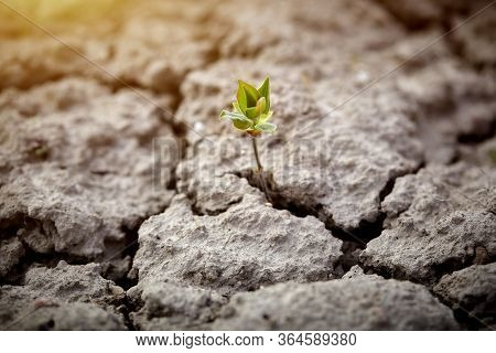 Tree Growing On Cracked Ground. The Concept Of Global Warming And Climate Change. Water Scarcity.