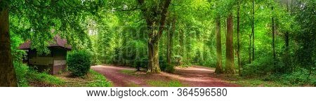 Tranquil Forest Scenery: A Panorama Of Trees And Paths In Vibrant Green Color And Soft Sunlight, Wit