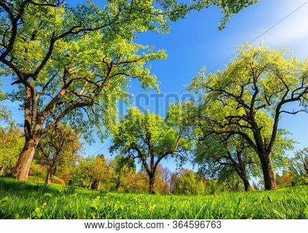 Beautiful Panoramic Green Landscape In Spring Or Summer, With Trees In A Row On A Meadow And The Sun