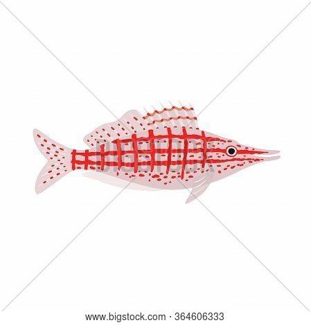 Longnose Hawkfish. Oxycirrhites Typus. Marine Fish. Vector Illustration