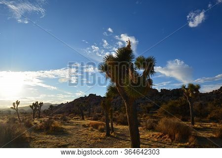 A Joshua Tree With Wispy White Clouds On A Fall Day