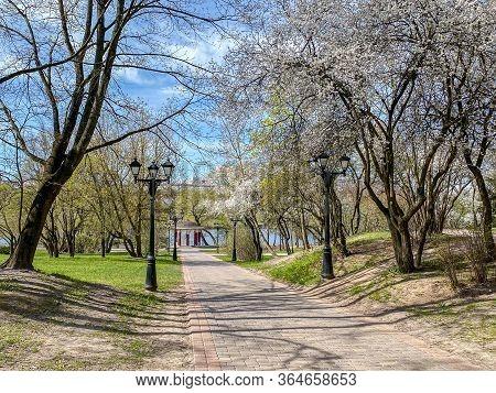 Cherry Blossom Path Through A Beautiful Landscape Of Spring City Park