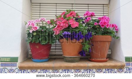 Delicate Scented Geranium And Petunia Plants On Window Sill Without Security Bars In Andalusian Vill