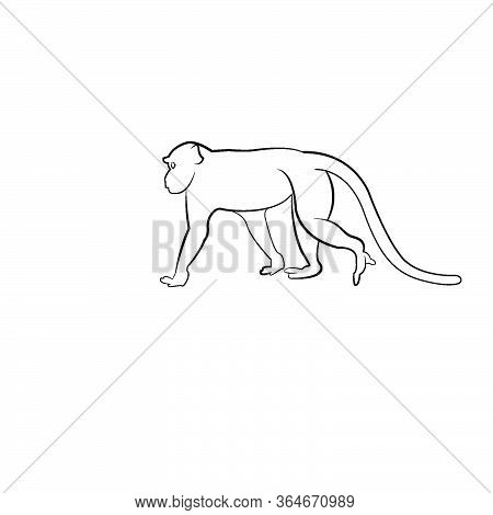 Walking Apes Monkey With Silhouette And Line Art, Ape, Chimpanzee Vector Illustration