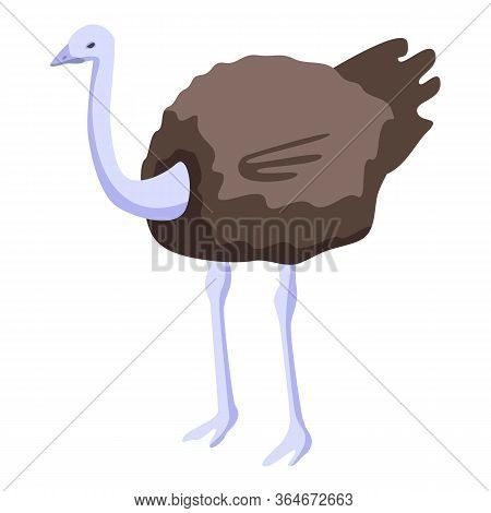 Africa Ostrich Icon. Isometric Of Africa Ostrich Vector Icon For Web Design Isolated On White Backgr