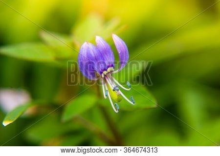 Close Up Of Purple Flower In Garden