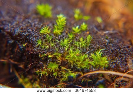Green Moss Grow In High Humidity