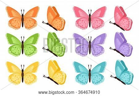 Different Butterflies Collection. Vector Illustration. Butterflies Isolated On White Background. Col