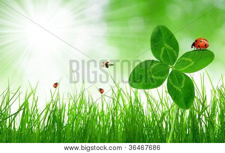 Fresh green grass with clover and ladybirds on green natural background