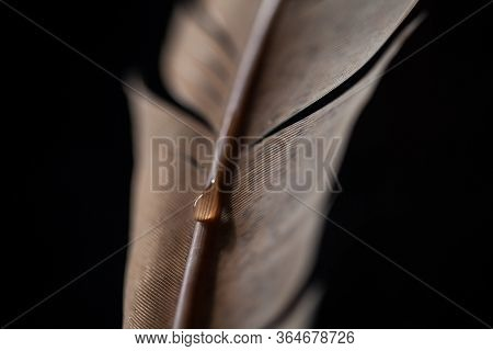 Fragment Of Bird's Feather With Water Drops. Selective Focus