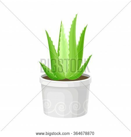 Aloe Vera Rosette Of Large, Thick, Fleshy Leaves Growing In Pot As Indoor Flora Vector Illustration