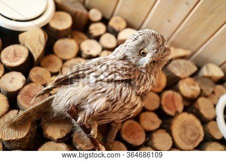 Details Of Stuffed Owl