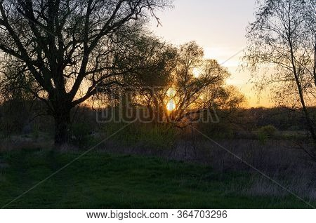 The Sun Sets Behind The Forest And The Light Of The Sun Passes Through The Tree, Springtime. Sunset
