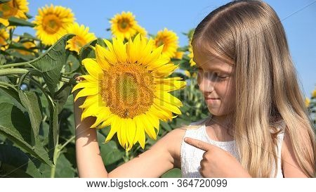 Farmer Kid In Sunflower Agriculture Field, Teenager Girl, Child Playing In Agrarian Harvest