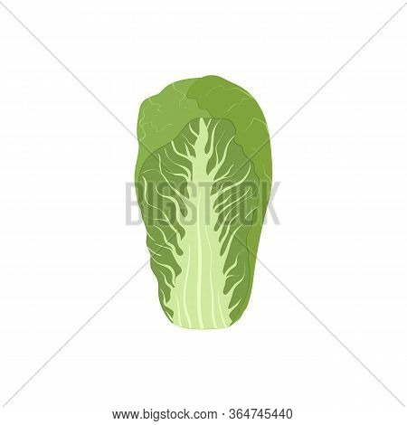 Vector Illustration Of Fresh Green Salad, Chinese Nappa Cabbage Isolated On White Background. Cartoo
