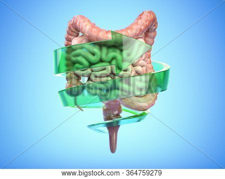 Intestine and digestive system protection and healthy bowel concept. Colon with arrow. 3d illustration