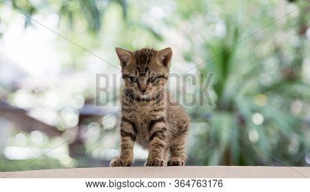 Newborn Kitty Cat Potrait On Stage