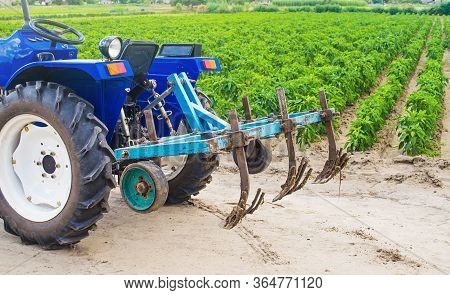 Blue Tractor With A Cultivator Plow In A Paprika Pepper Plantation. Farming, Agriculture. Cultivatio