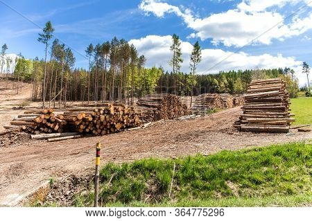 Forest Slope After Felling After Attack By Bark Beetle. Deforestation. Cutted Spruce Forest In The C