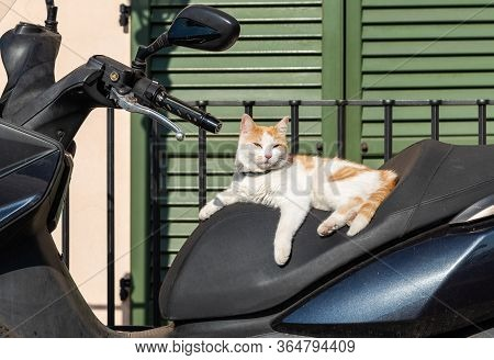 A White-red Cat In The Seat Of A Scooter Enjoying The Sun