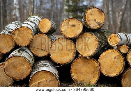 Deforestation Process Felling Of Trees In Wood Land Natural Space Ecology Problem Concept Picture