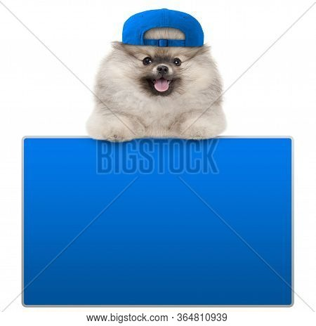 Cute Furry Pomeranian Dog With Blue Cap, Leaning With Paws On Blank Blue Social Media Sign, Isolated