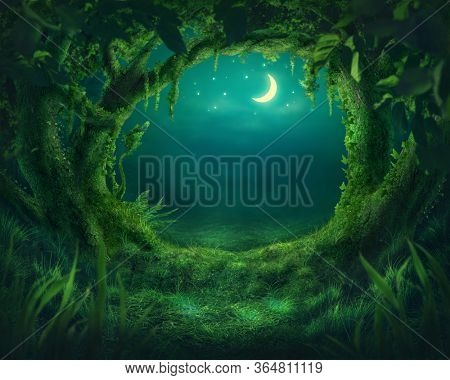 Magic forest in the moonlight