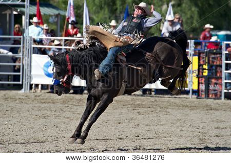 SAN JUAN CAPISTRANO, CA - AUGUST 25: unidentified cowboy competes in the bareback riding event at the PRCA Rancho Mission Viejo rodeo in San Juan Capistrano, CA on August 25, 2012.