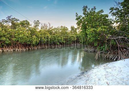 Mangrove Trees Grow Along The Waterways Of Clam Pass