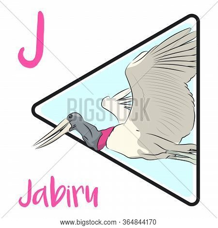 J For Jabiru, A Large Stork Found In The Americas From Mexico To Argentina. Jabiru Is The Tallest Fl