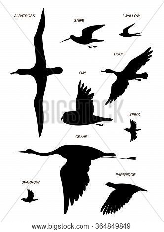 Flying Birds With Text Names (crane, Gull, Albatross, Duck, Sparrow, Sandpiper, Partridge, Owl, Swal