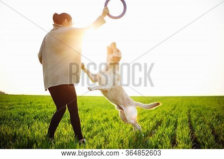 Cheerful And Happy Dog Labrador Retriever Plays With His Young Woman Owner On A Green Field On The S