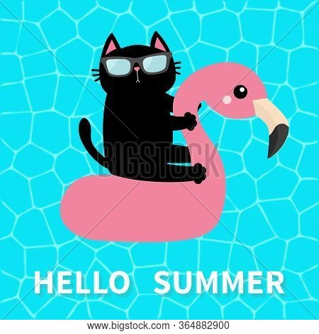 Hello Summer. Swimming Pool Water. Black Cat Floating On White Flamingo Pool Float Water Circle. Top