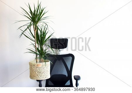 A Big Green Plant Dracaena In A Knitted Pot Stay At A Modern Gray Rattan Sofa With Two Yellow Pillow