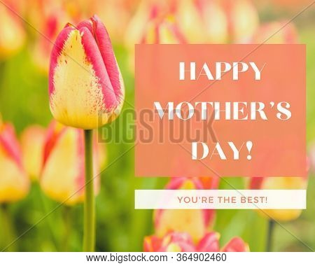 Happy Mother's Day Concept with garden tulips.