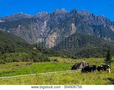 View Of The Majestic Mount Kinabalu In Desa Cattle Dairy Farm Kundasang,sabah,borneo.a Popular Touri