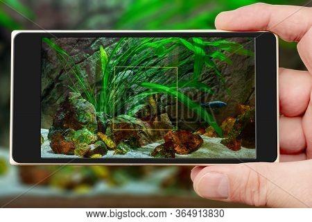 Aquarium On Smartphone Screen. Underwater World Of Aquarium. Plants And Fish In Freshwater Aquarium.