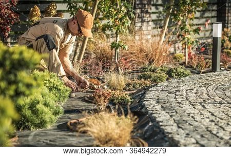 Male Caretaker Planting Flower Bulbs In Patio Area Of Large Enclosed Backyard.
