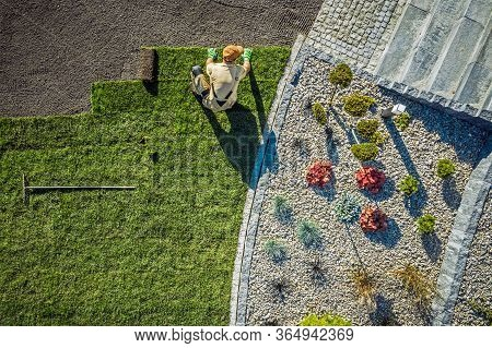 Aerial View Of Male Gardener Laying Rolls Of Sod In Large Area Of Residential Backyard.