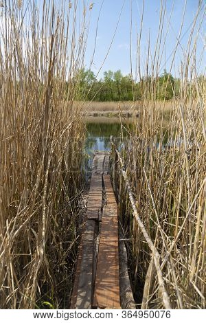 Overflow Land. Old Wooden Bridge For Fishing, Among The Reeds, On A Quiet River. Landscape On The Ri
